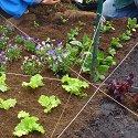 Salad Bowl Garden